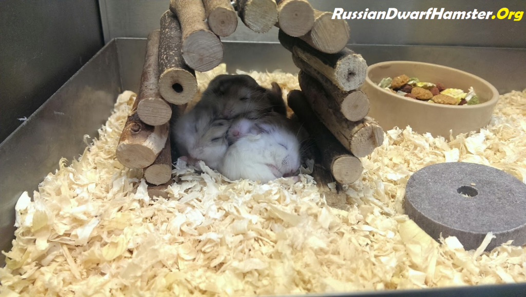 How to save money Buying dwarf hamster cages.
