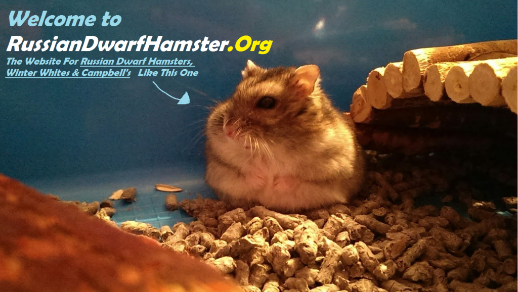 Best Cage For Russian Dwarf Hamster
