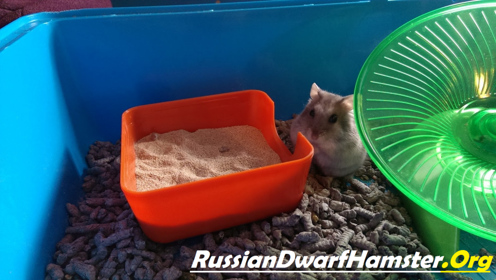 Sand bath for dwarf hamster