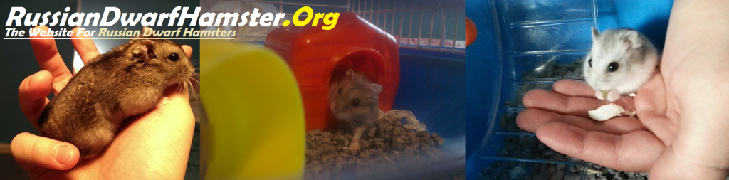 RussianDwarfHamster.Org The Website for Russian Dwarf Hamsters Campbell's and Winter White Hamsters