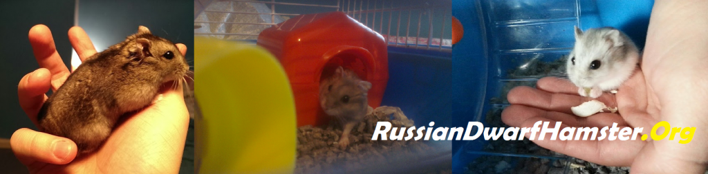 RussianDwarfHamster.Org The Website For Russian Dwarf Hamsters