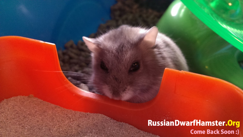 Dwarf hamster keeps biting cage bars at night